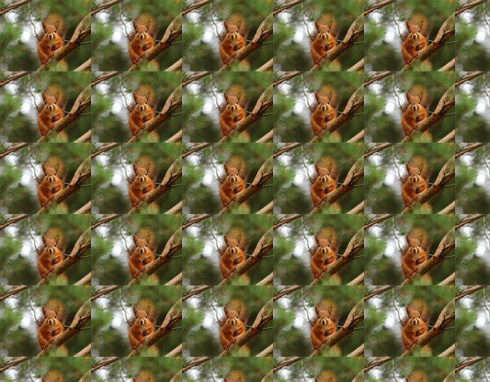 Vinylová Tapeta Roztomilá veverka v borovici - Savci