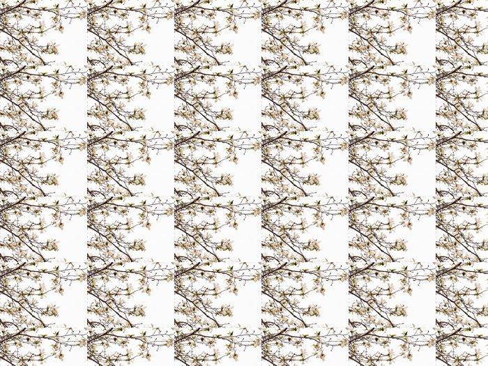 Vinylová Tapeta Kvetoucí Magnolia květy v modré obloze - Roční období