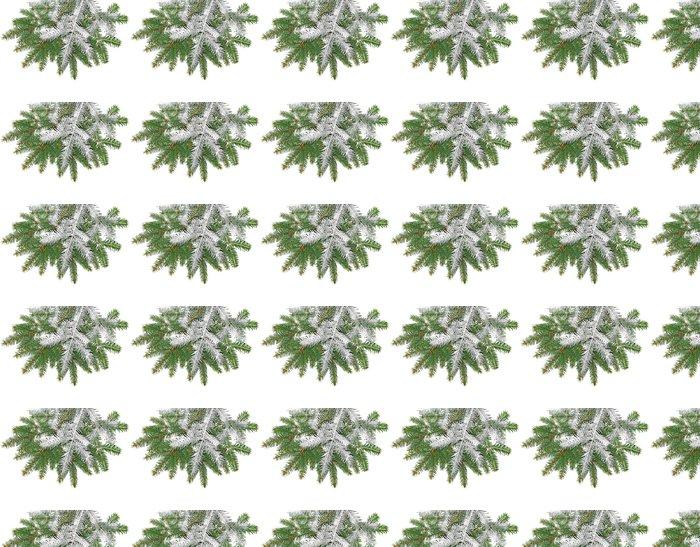 Vinylová Tapeta Smrk větvičku sněhem na bílém pozadí - Stromy