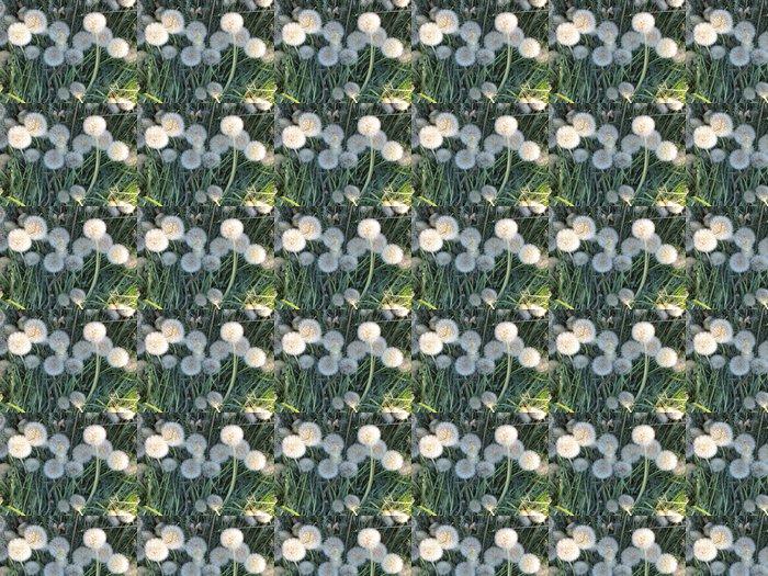 Vinylová Tapeta Dandelions - Květiny