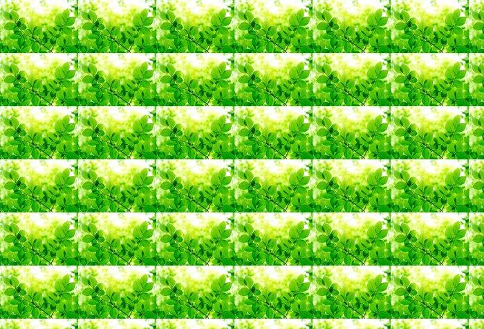 Vinylová Tapeta Zelené listy pozadí - Stromy