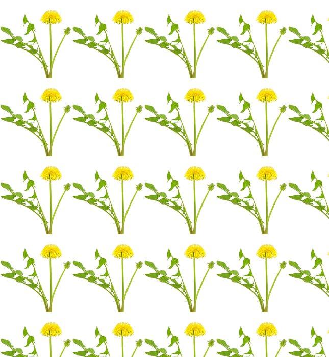 Vinylová Tapeta Pampeliška květ - Květiny