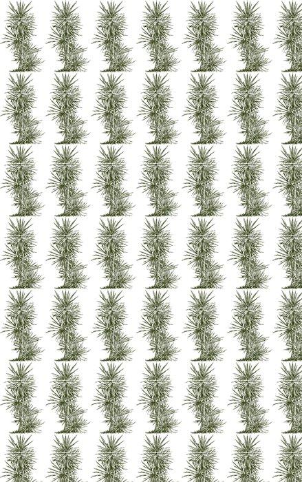 Vinylová Tapeta Palma - Stromy a listí
