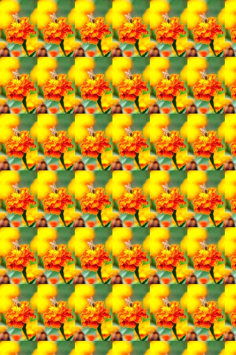 Vinylová Tapeta Makro záběr včelí sběr pylu z květu měsíčku - Ostatní Ostatní