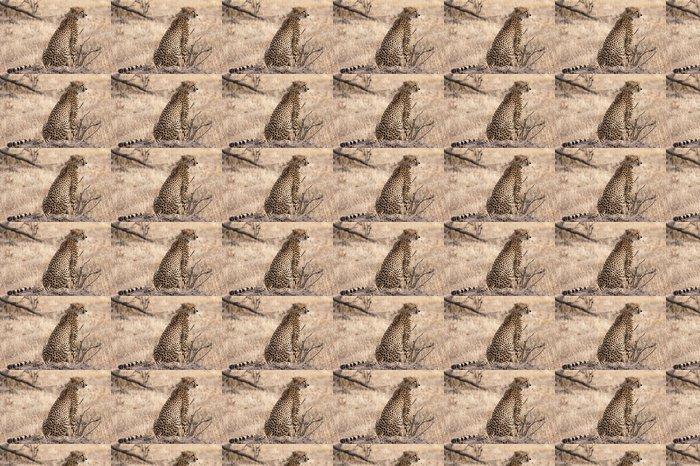 Vinylová Tapeta Gepard na pozoru - Afrika