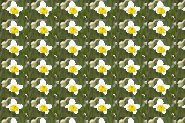 Vinylová Tapeta Narcis - Květiny