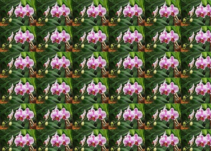 Vinylová Tapeta Orchidej orchideje - Květiny