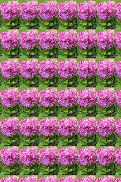 Vinylová Tapeta Krásné hydranea květiny zblízka - Pozadí