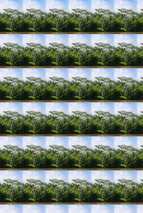 Vinylová Tapeta Rainforest, Amazon - Amerika