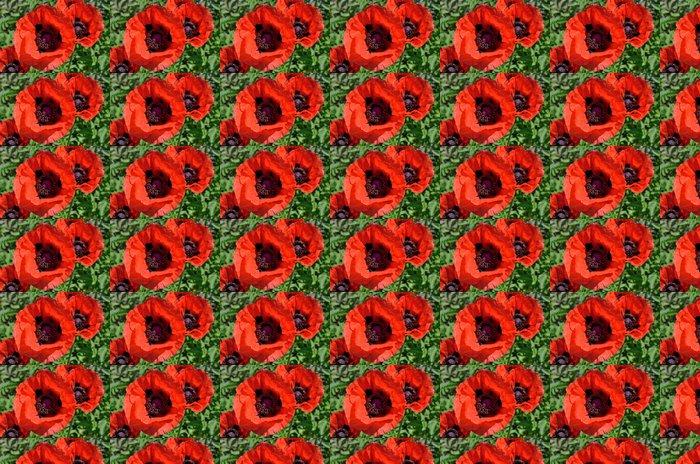 Vinylová Tapeta Červené květy máku - Rostliny