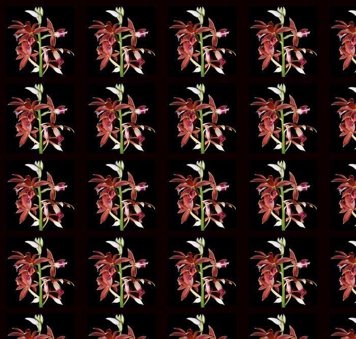 Vinylová Tapeta Orchidej 11 - Květiny