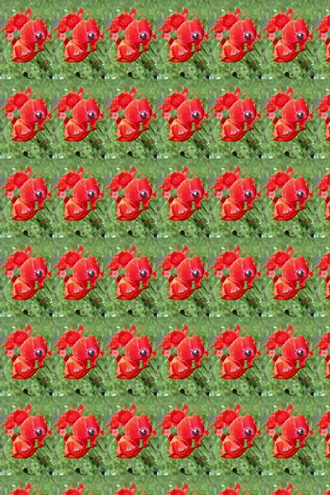 Vinylová Tapeta Krásné divoké vlčí máky - Květiny