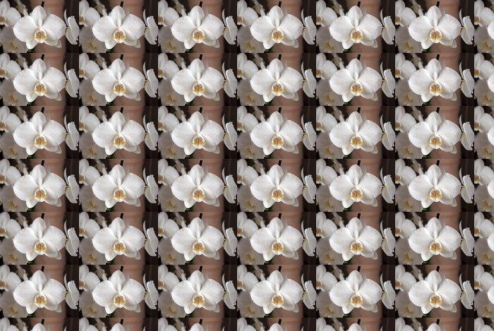 Vinylová Tapeta Bílá orchidej - Květiny
