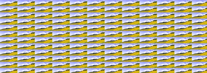 Vinyltapete Feld von gelben Blüten - Himmel