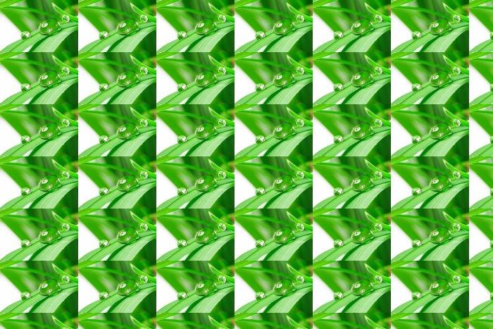 Vinylová Tapeta Kapky s zelené trávy - Rostliny