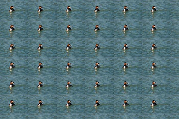 Vinylová Tapeta Exotické potápka na modré moře - Ptáci