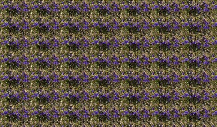 Vinylová Tapeta Viola altaica - Květiny