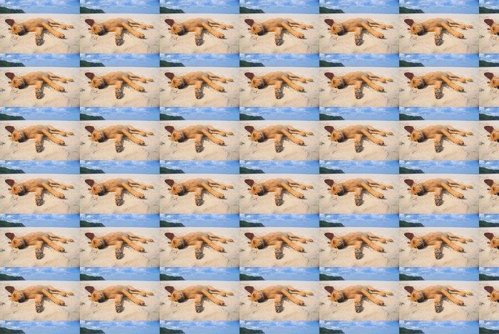 Vinylová Tapeta Pes spí na pláži. - Voda