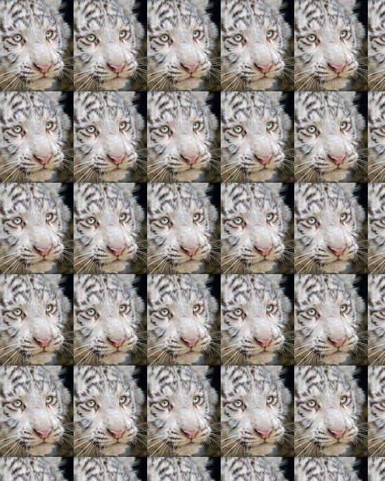 Vinylová Tapeta Detailní bílá Dítě tygra hlava - Život