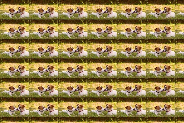 Vinylová Tapeta Jack Russell - Savci