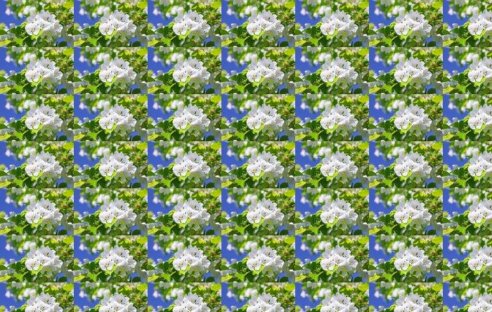 Vinylová Tapeta Květ jabloně - Květiny