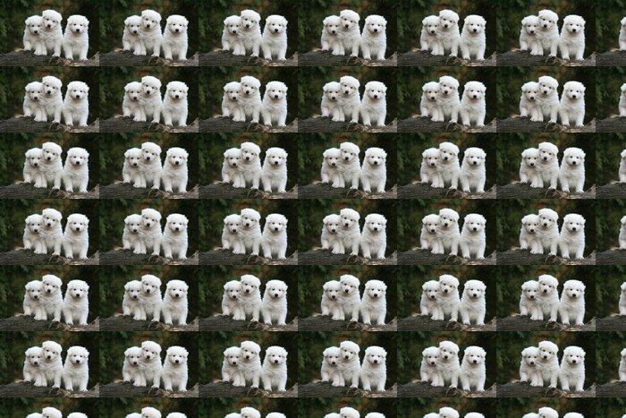 Vinylová Tapeta Chiots bílý švýcarský ovčák - Savci