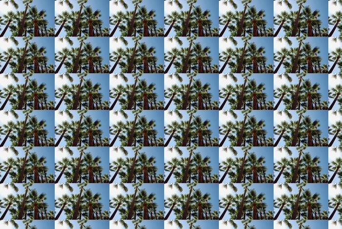 Vinylová Tapeta Palmy na pláži v Cannes, se spoustou slunečního svitu - Evropa