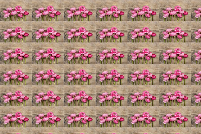Vinylová Tapeta Pink perština pryskyřník květ (Ranunculus) na dřevěné pozadí. - Slavnosti