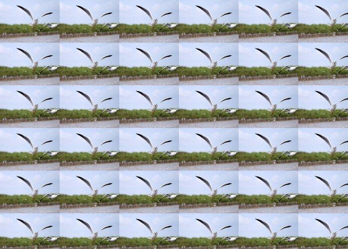 Vinylová Tapeta Létající racků v akci - Ptáci