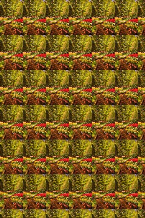 Vinylová Tapeta Zahrada v Keukenhof, tulipán květiny a stromy. Nizozemí - Evropa