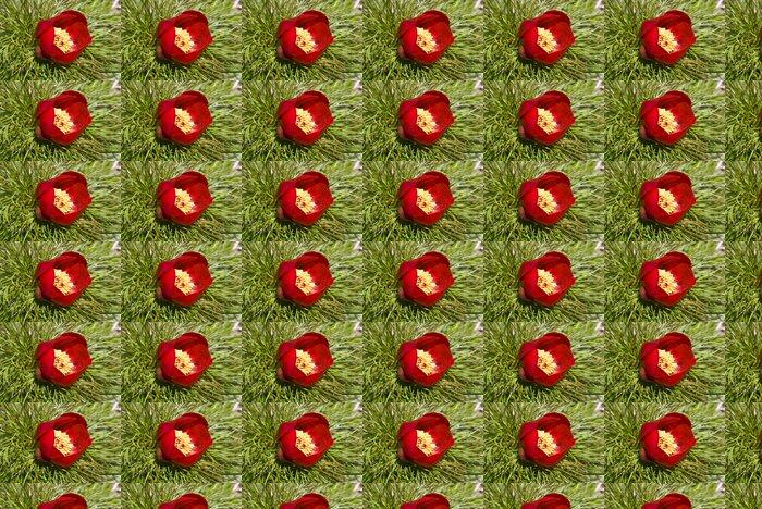 Vinylová Tapeta Divoké Paeonia lactiflora - Květiny