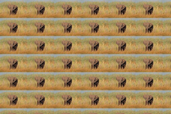 Vinylová Tapeta Africký slon - Savci