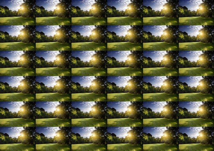 Vinylová Tapeta Jasné paprsky světla svítí lesem v časných ranních hodinách - Nebe