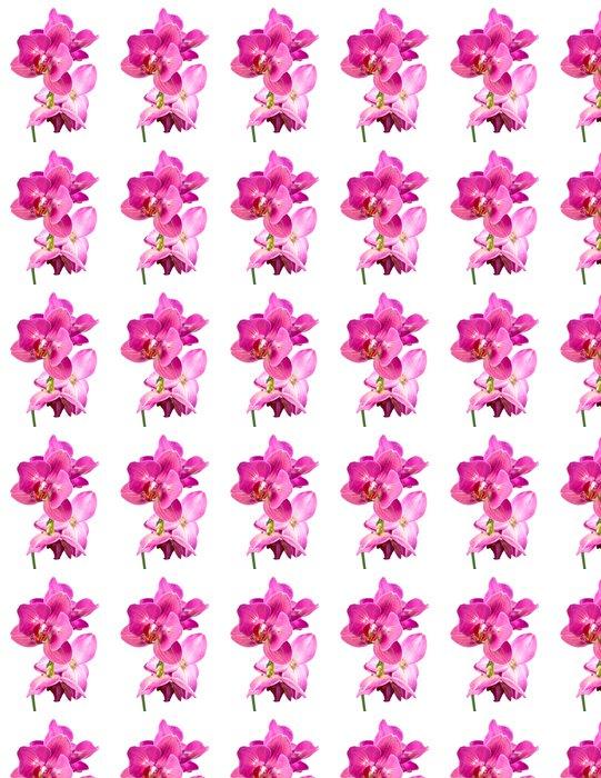 Vinylová Tapeta Orchid květiny - Květiny