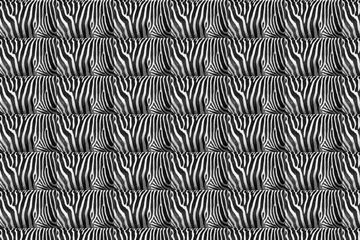 Vinylová Tapeta Fotografie zebra textury Černá a bílá - Témata