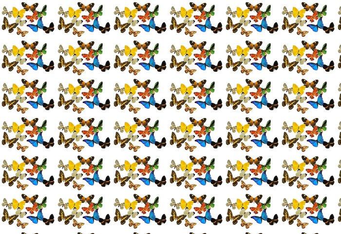 Vinylová Tapeta Skupina motýlů - Ostatní Ostatní