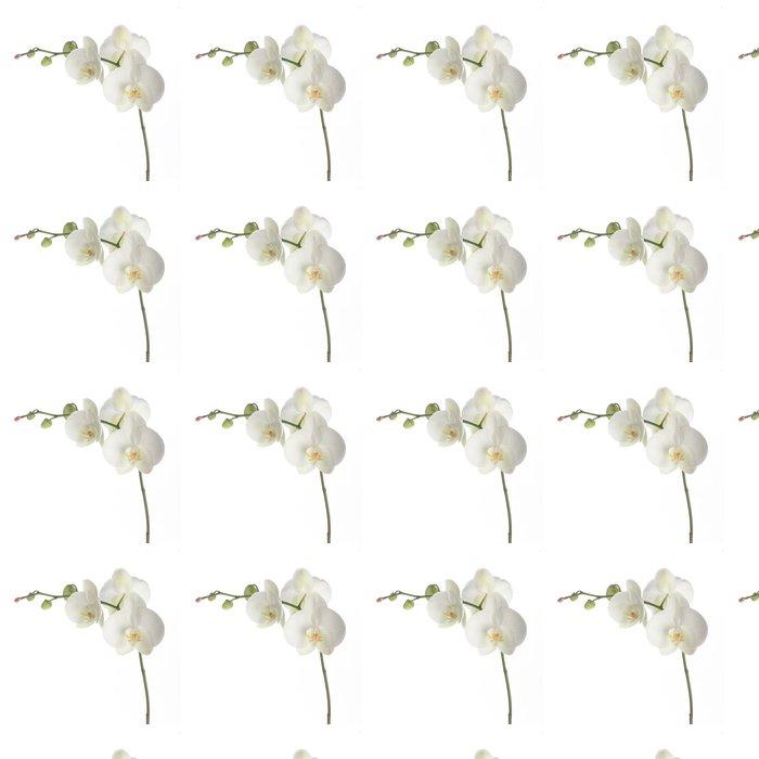 Vinylová Tapeta Bílá orchidej - Nálepka na stěny