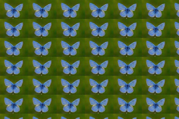 Papier peint à motifs vinyle Papillon - Farfalla - Autres Autres