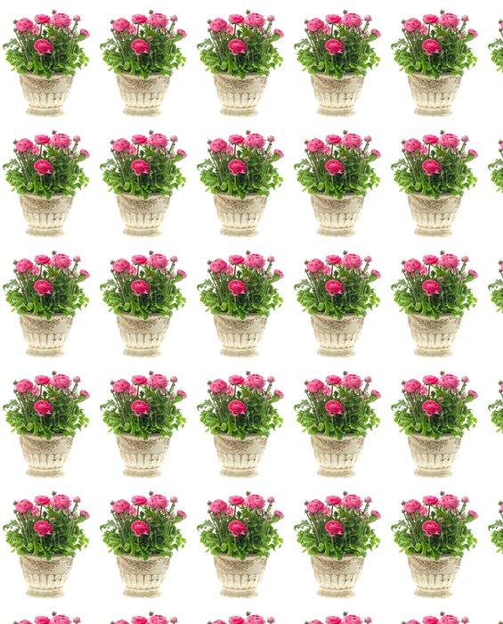 Vinylová Tapeta Krásné růžové pryskyřník závod v hrnci na bílém - Domov a zahrada