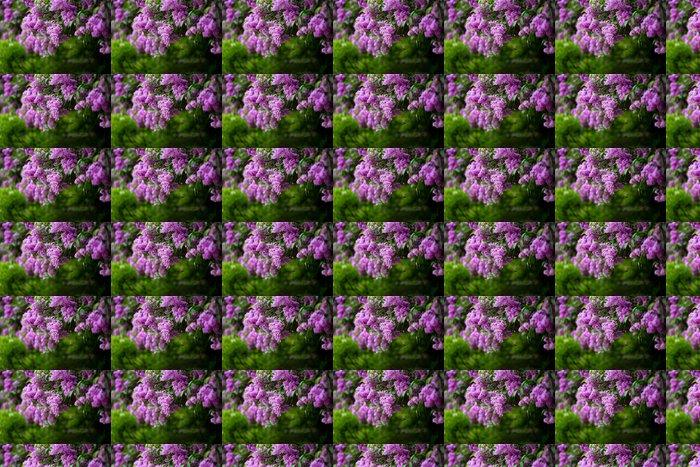 Vinylová Tapeta Banda fialové lila květ (mělký DOF) - Květiny