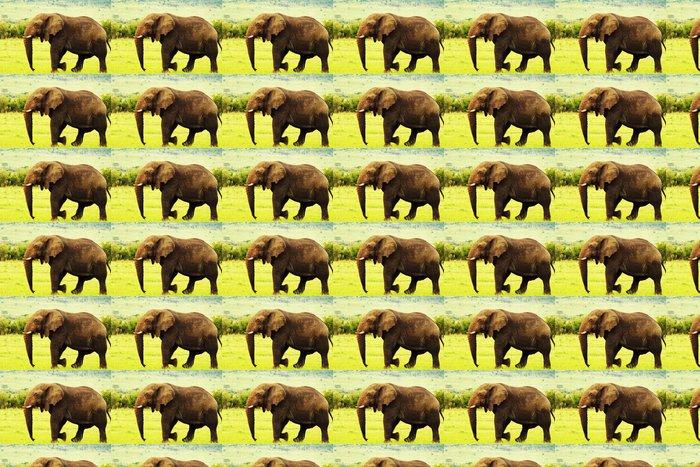 Vinylová Tapeta African wild slon - Afrika