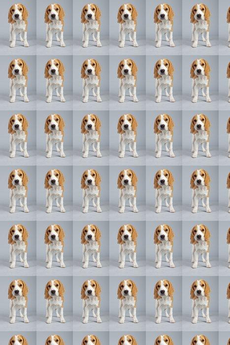 Vinylová Tapeta Roztomilé štěně beagle pes izolovaných na šedém pozadí. Knoflíček - Savci