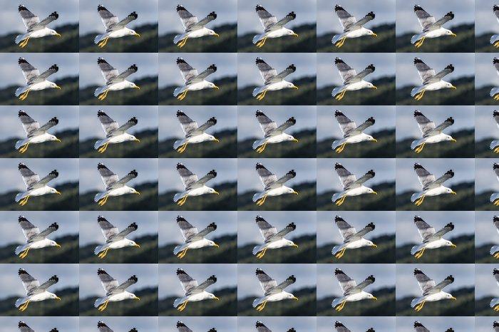 Vinylová Tapeta Seagull pták létání - Ptáci