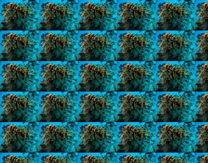Vinylová Tapeta Podmořský život - Afrika