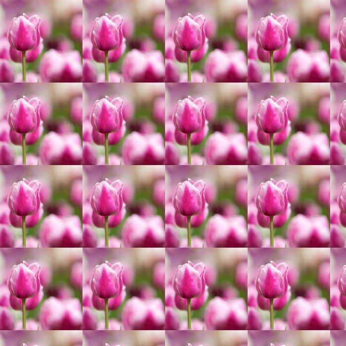 Vinylová Tapeta Pole tulipánů - Květiny