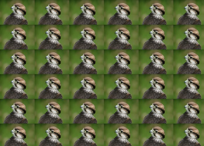 Vinylová Tapeta Lanner Falcon - Ptáci