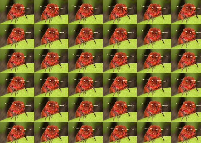 Vinylová Tapeta Ruby tygr (Phragmatobia fuliginosa) - Ostatní Ostatní