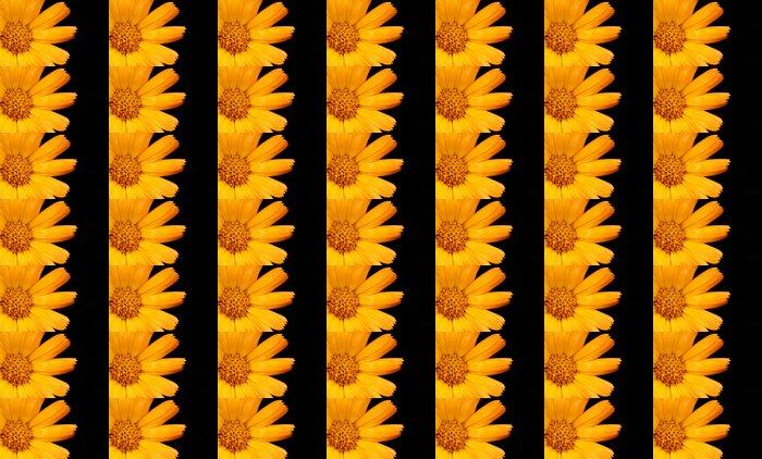 Vinylová Tapeta Jemné detailní obraz květů pomeranče pozadí - Květiny