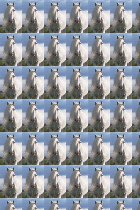 Vinylová Tapeta Bílý kůň hřebec portrét - Témata