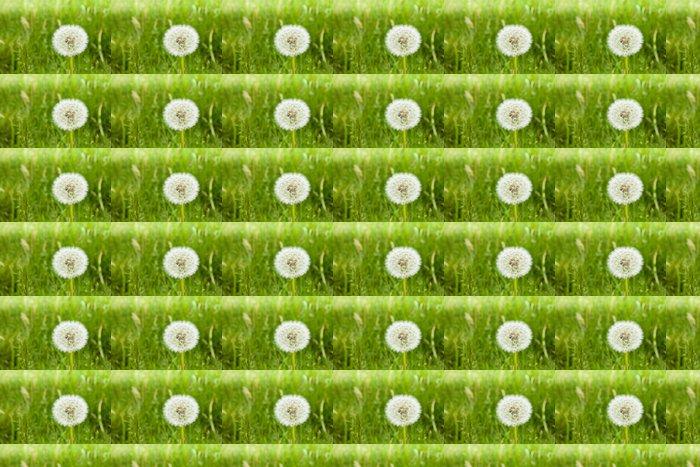 Vinylová Tapeta Single pampelišky v zelené trávě - Roční období